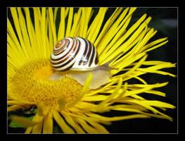 Snail... by Tetty