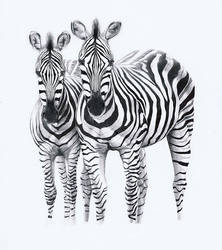 Two Zebras by PunkyMeadows