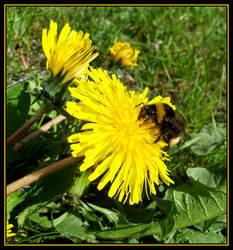 B for bee by Gerridwen