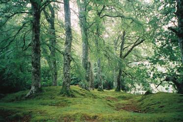Forest by Sheckler05