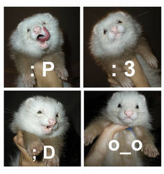 Ferret Collage by Silsuka