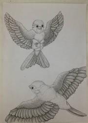 Bird anatomy study by TinyNerdGirl