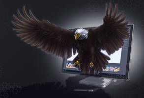 Photoshop Creation becomes real: The Sea Eagle by RiehlART