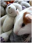 Spot the Pig v.2 by kimistarrphotography