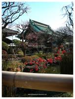JAPAN 2011 by StillesWasser