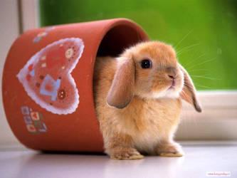 rabbit by liliyxxx