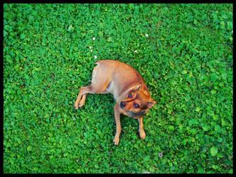My grass dog by dcafuk1