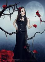 the wild rose by urbania13