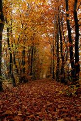 Path of leafs by Manjsche