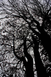 Twisted branches by Manjsche