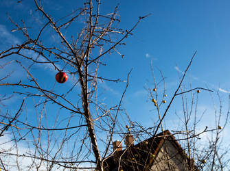Last Apple by CrawlingGirl