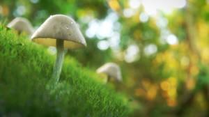 Mushroom In The Grass by QuickBoomCG