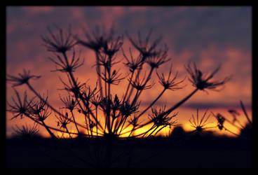 Goodbye, sun! by Sundottir