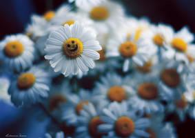 Smile by bulavina