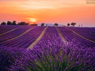 Provence by bulavina