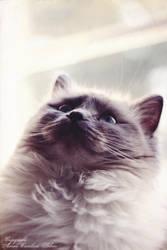 Vintage Cat by Iamo