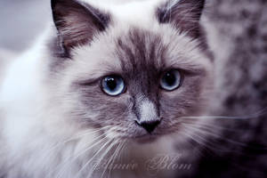 Winter kitty by Iamo
