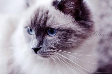 Winter kitty 2 by Iamo