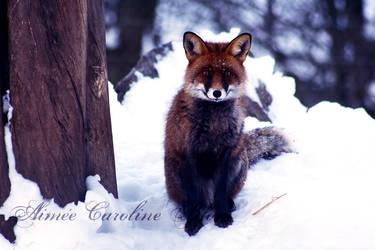 So Foxy by Iamo
