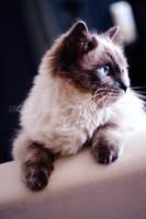 Warm kitty, soft kitty by Iamo