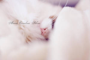 Little ball of fur by Iamo