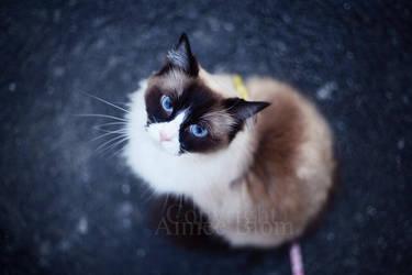 Kitten on a journey by Iamo