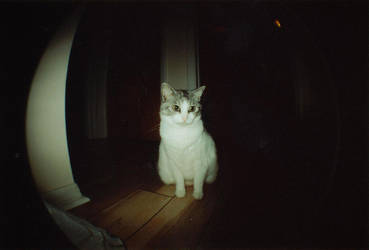 Lomo - 2 by witchlady750