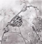 Botany - The Strobile by grenia