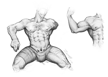 Muscle study by Zepht7