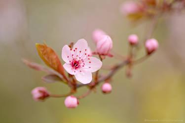 Spring1501 by thestargazer23