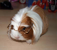 Nearsighted Guinea Pig Crystal by dreamstone