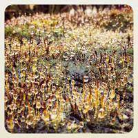 Drop in the Garden by Merlyn-Wooden
