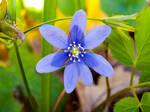 blue sun by feniksas4