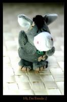 Donkey by Cavin