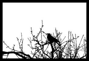BW bird by Cavin