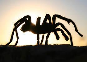 Tarantula 2 by freddyfivemiles