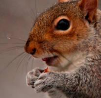 Peanut Purveyor by Tinap