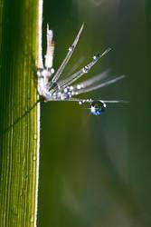 Secret life of a grass. by bilutek