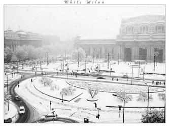 White Milan by galilla