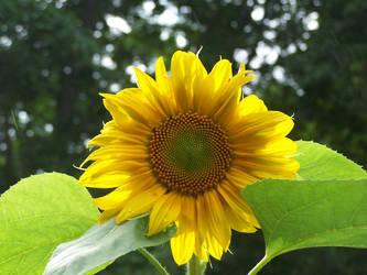Sunny Delight by Trafalgar