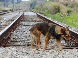 Dog at Itapeti Station by Alexandre-ue