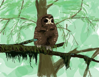 Owl in Forest by david-shultz