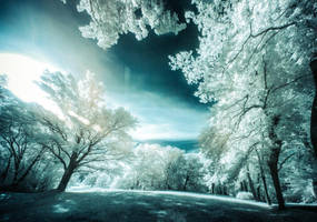 Experiments in Infrared - Park reloaded by DanielGliese