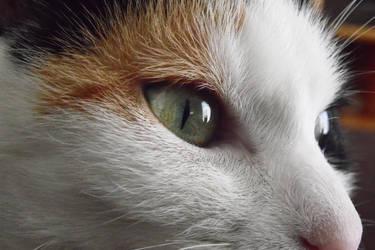 Amazing Eye Stock Photo by MariaRaute2