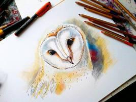 Barn -owl by bemain