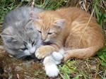 Coeur de chatons / Heart of kittens by PhotosCrystalJones