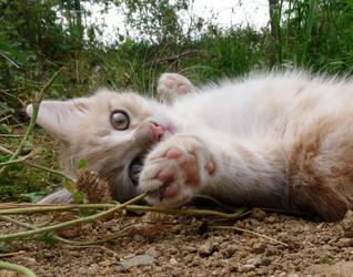Chaton Esme / Esme kitten by PhotosCrystalJones