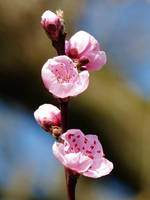 Fleurs / Flowers by PhotosCrystalJones