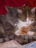 Cat / Chat by PhotosCrystalJones