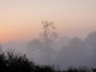 Misty sunrise by PhotosCrystalJones